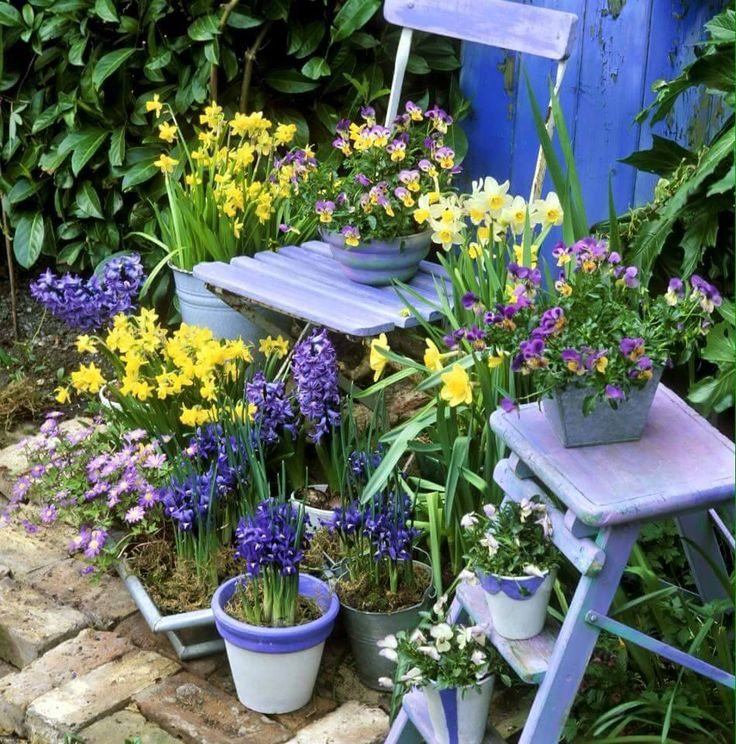 Purple and yellow go so well together ? #gardensthatwin #gardening #garden…