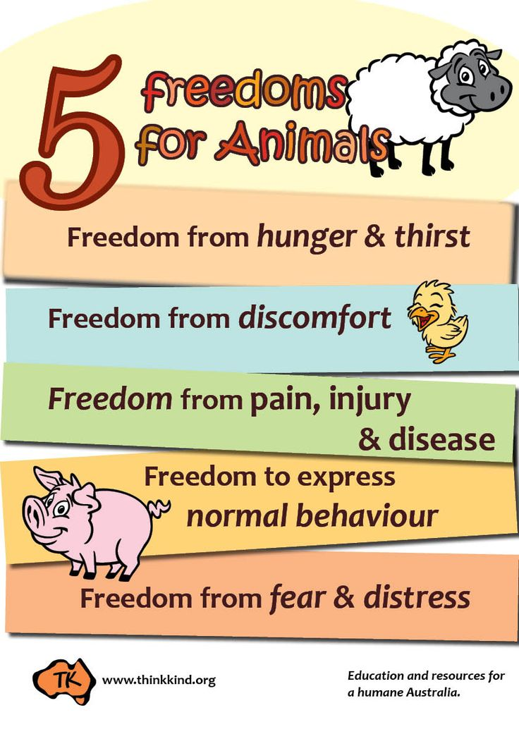 5 Freedoms for Animals Poster