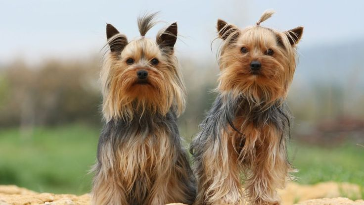 Cutest Small Dog Breeds In The World | Best Small Dogs
