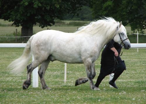 Carlung Highland Ponies