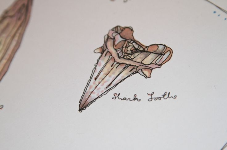 Kate Fitzpatrick - Shark Tooth  I want this on my ankle so bad..