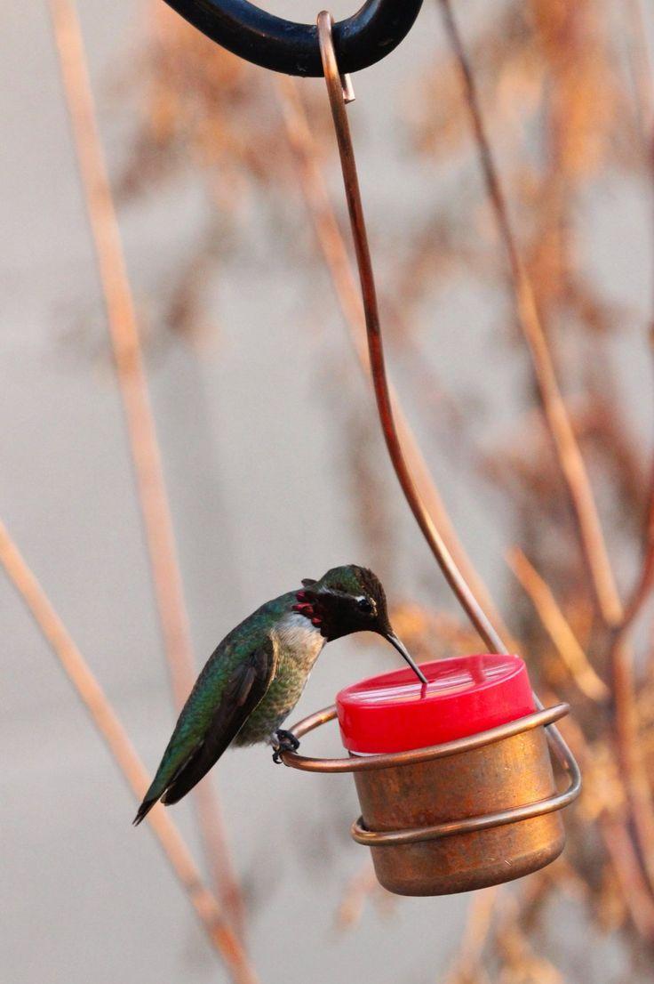 Best Copper Hummingbirds Feeder New Bee & Wasp Proof