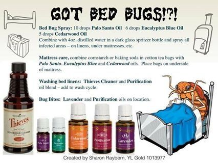 Bed Bugs Diy Sprays Bugs Repellant Home Sprays First