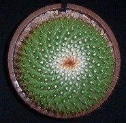spirals 11 17