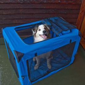 Soft-sided folding dog crate