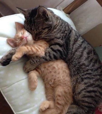 They like to spoon (SFW) - Imgur