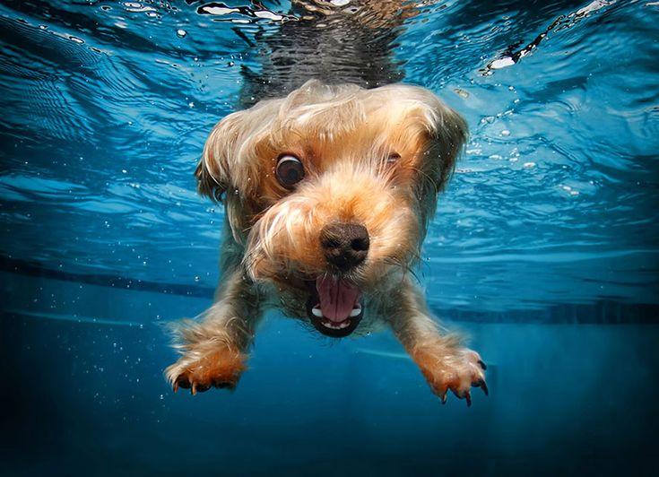 Подводные собаки: фотографии Сета Кастила (Seth Casteel)