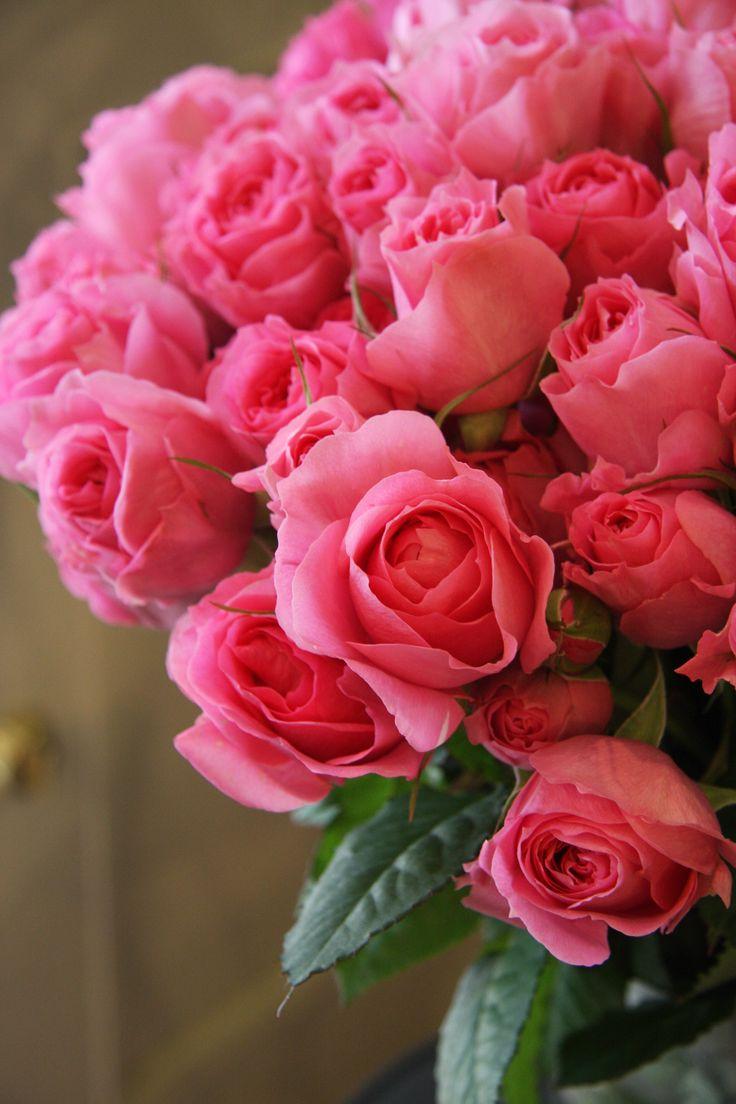 Nice Flower Tattoo Ideas For Women: 25+ Best Pink Flowers Trending Ideas On Pinterest