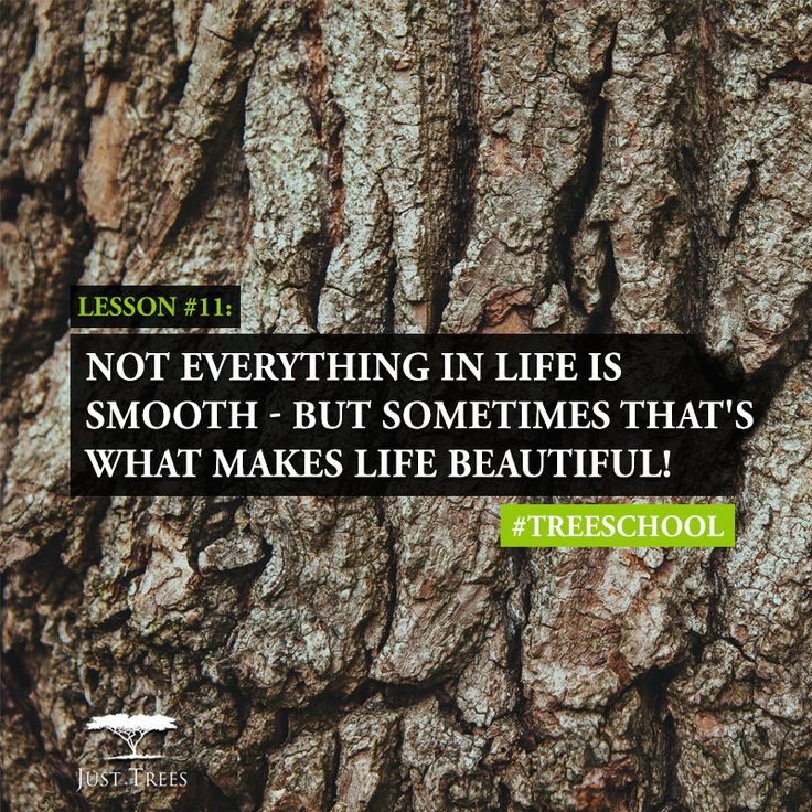 Back to #TreeSchool and the many lessons we can learn from our grounded friends: Not everything in life is smooth - but that's what makes life beautiful! :)
