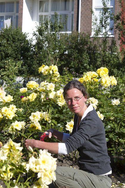 rozen stekken - goede tips - einde aug doen