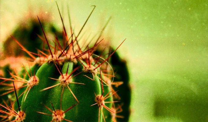 Ezt a tesztet egy skót pszichológuscsoport dolgozta ki, melyben kaktuszokkal ábrázolja a különféle személyiségtípusokat. A kaktusz, bár szúrós, de ettől függetlenül szép és elegáns, nem utolsó sorban azonban arról is árulkodik, hogy mennyire vagy képes megsebezni másokat. Te mennyire vagy szúrós? Teszteld magad, és máris kiderül!  - Női Portál - Női Portál - a nők birodalma - Nőiportál.hu