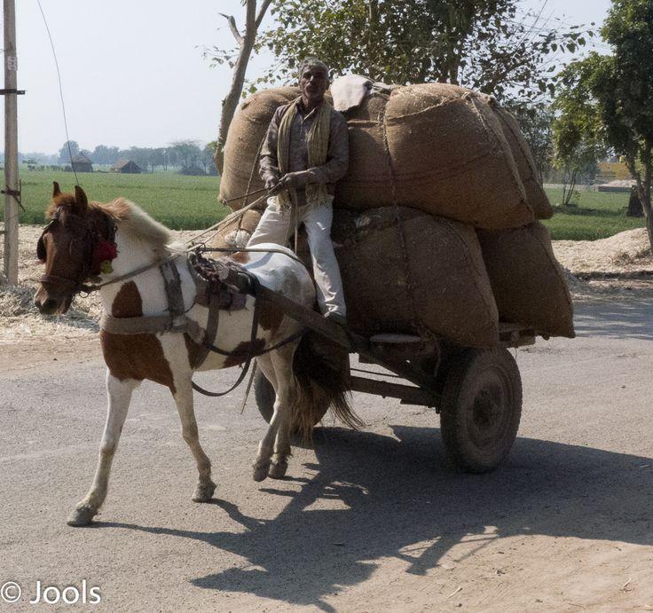 Rural transport near Vrindavan.