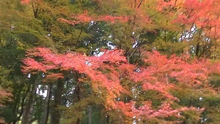 fantastic beautiful autumn leaves 諏訪神社の紅葉鳥取県・智頭町・64
