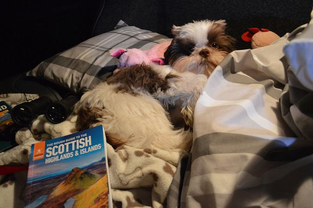 Is Your Shih Tzu Driving Your Crazy Eliminate Over 30 Common