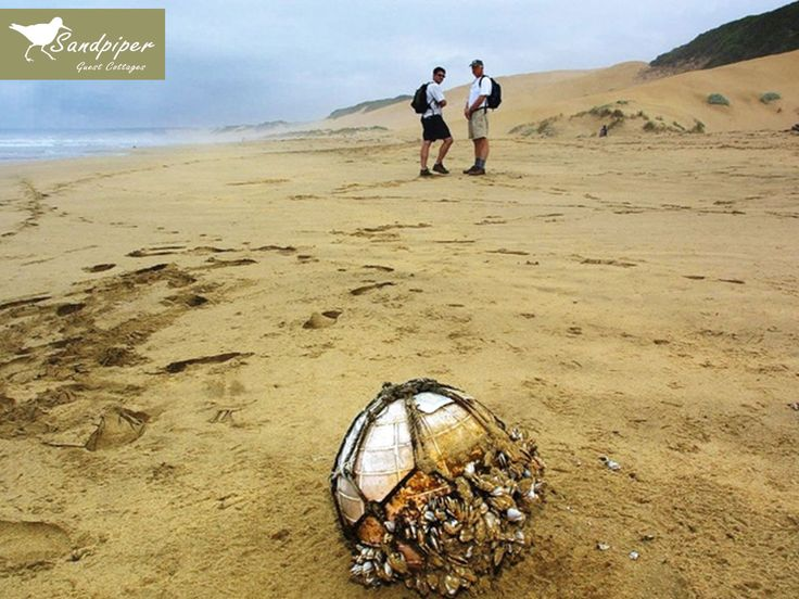 The Oystercatcher Coastal Hiking Trail is a fabulous eco-adventure. Rated as one of the top slack packing trails in the world. We can provide guides for you to take you on short walks with beach lunches.  Link: http://ow.ly/ko3U307DFMz
