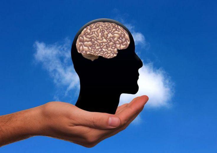 Mozek – psychická výkonnost – zdravá krev, tato spojitost je pro tuto aktuální otázku zásadní.Končí prázdniny a mnohé z nás