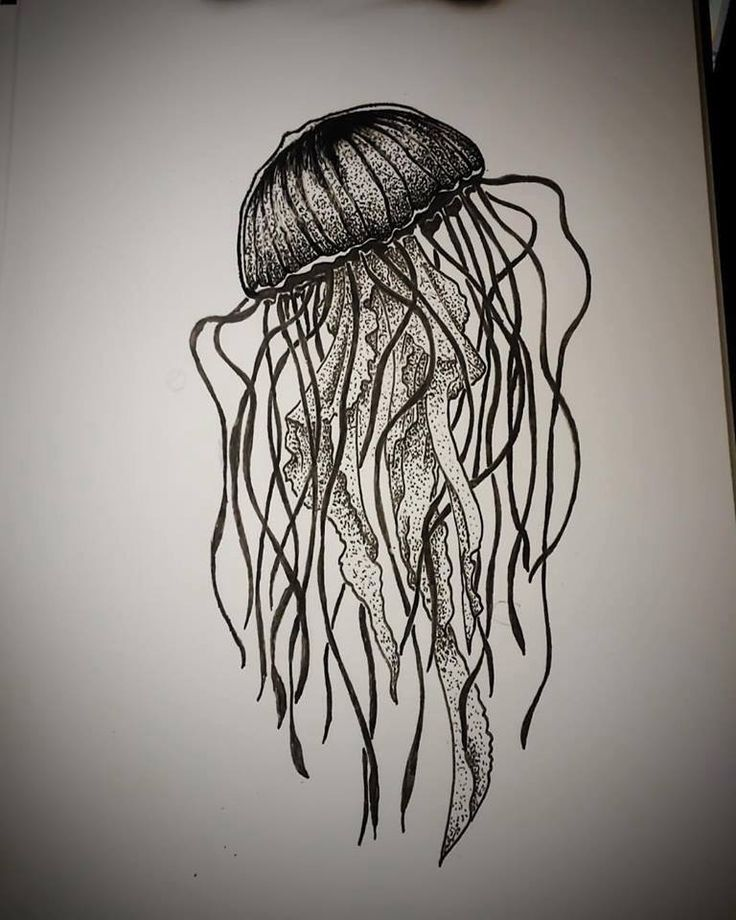 #blackwork #dotwork #jimmybct #cyphertattoo #jellyfish #ct #tattoo #idea #drawing