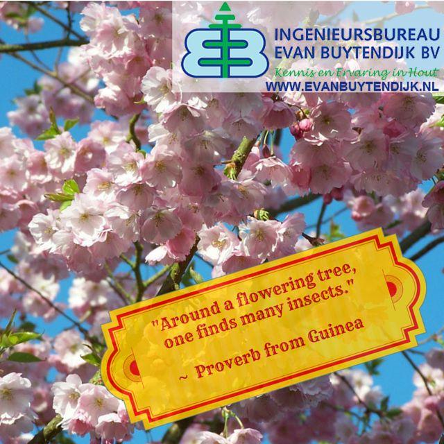 Citaten Over Bomen : Best citaten uitspraken en aforismen over hout bomen