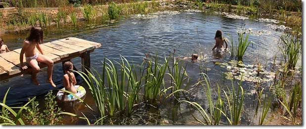 Natural Swimming Pools for Passive Holistic Education, Increased Diversity, and Health