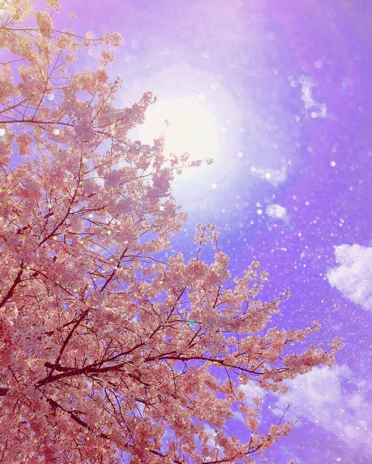 サロン隣の公園のさくら   #私らしさ #爆発 な #配色 #桜 #sakura #flower #Japan #パステルカラー #pastelcolor #파스텔 #사쿠라 #ゆめかわいい #春 #springjapan  #spring #japanspring  #イマソラ  #東京カメラ部 #太陽 #そら #さくら #公園 #iger  #ランチタイム #ig_japan  #カメラ女子 #iPhone #画像加工 #アプリ #つばさ