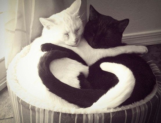 Looks just like my 2 cats ♥