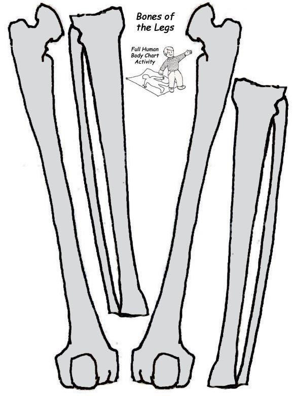 Esqueleto a tamaño natural para imprimir