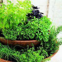 Como fazer uma horta em vasos? - Cultivando.com.br