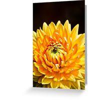 Bright Yellow Chrysanthemum flower Greeting Card