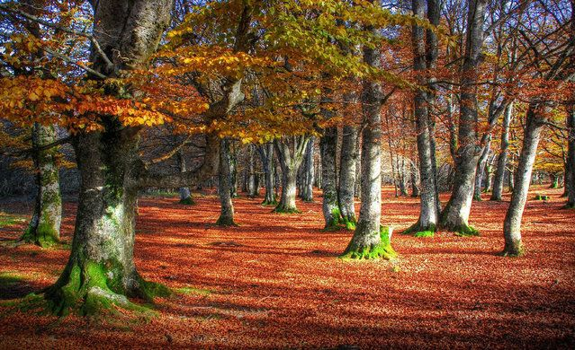 A Mystical Forest In Spain