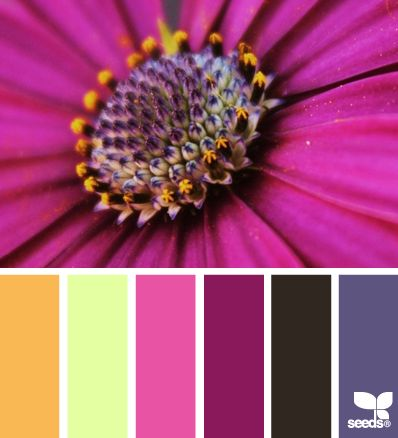Oh, how I love these bold, contrasting, royal-feeling hues. Terrific for a high Excellence value. Also nice for Innovation or Audacity. | flora palette via Design-Seeds | commentary via The Voice Bureau at AbbyKerr.com