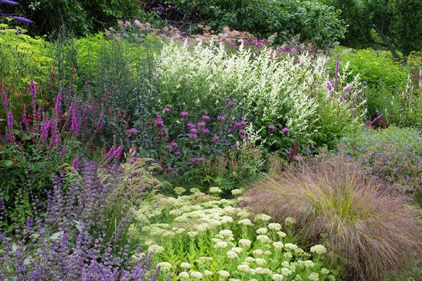Perennial border borders pinterest perennials for Grasses for garden borders