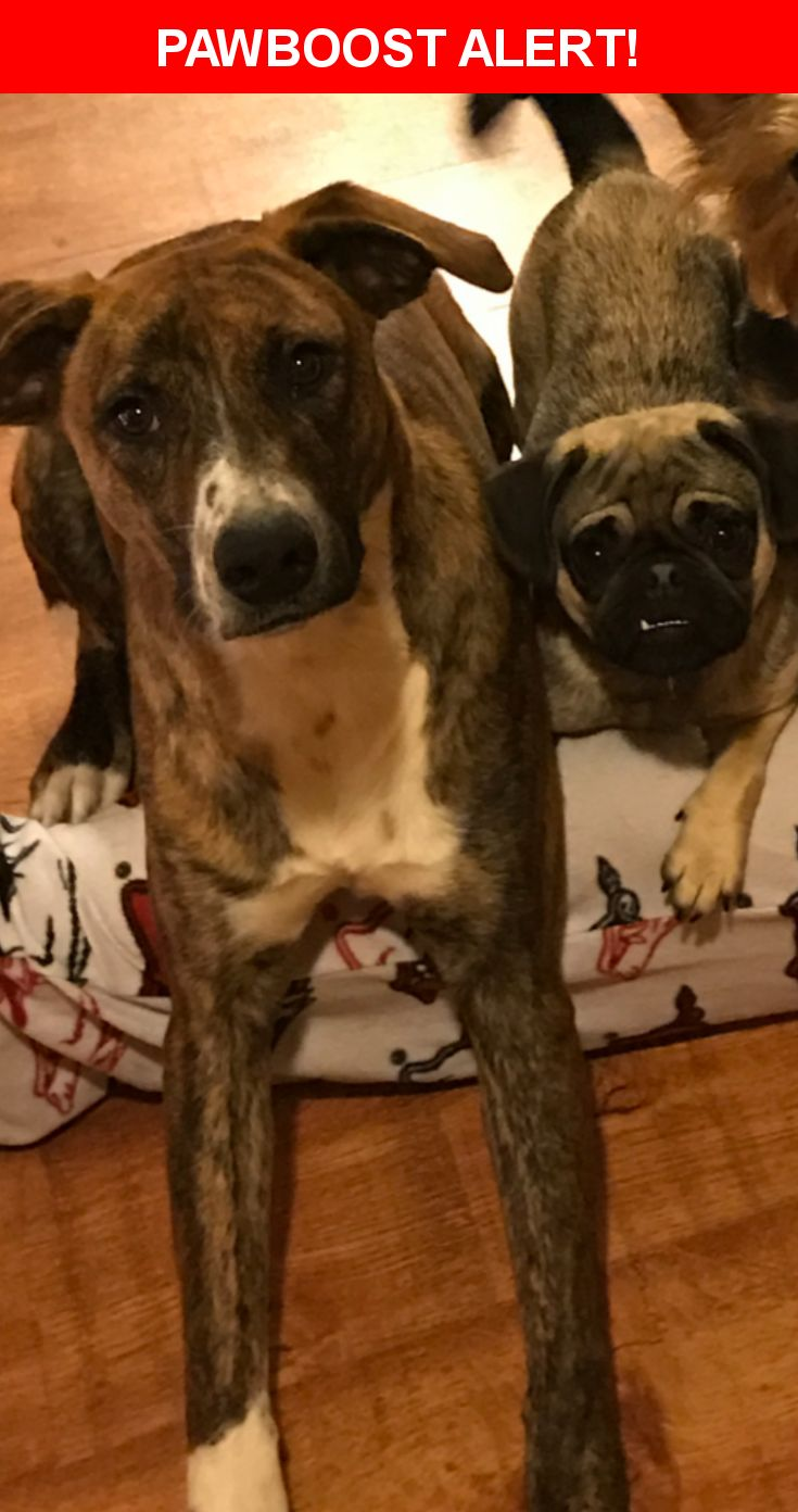 Please spread the word! Jaeger/nellie was last seen in Van Buren, AR 72956.  Description: Nellie is a pug with a tan body and black face and Jaeger is a mix looks like a lab with brindle color and white on his chest. Jaeger is wearing a black collar and Nellie is wearing a purple one  Nearest Address: Near S Arkansas Ave & Peters Dr