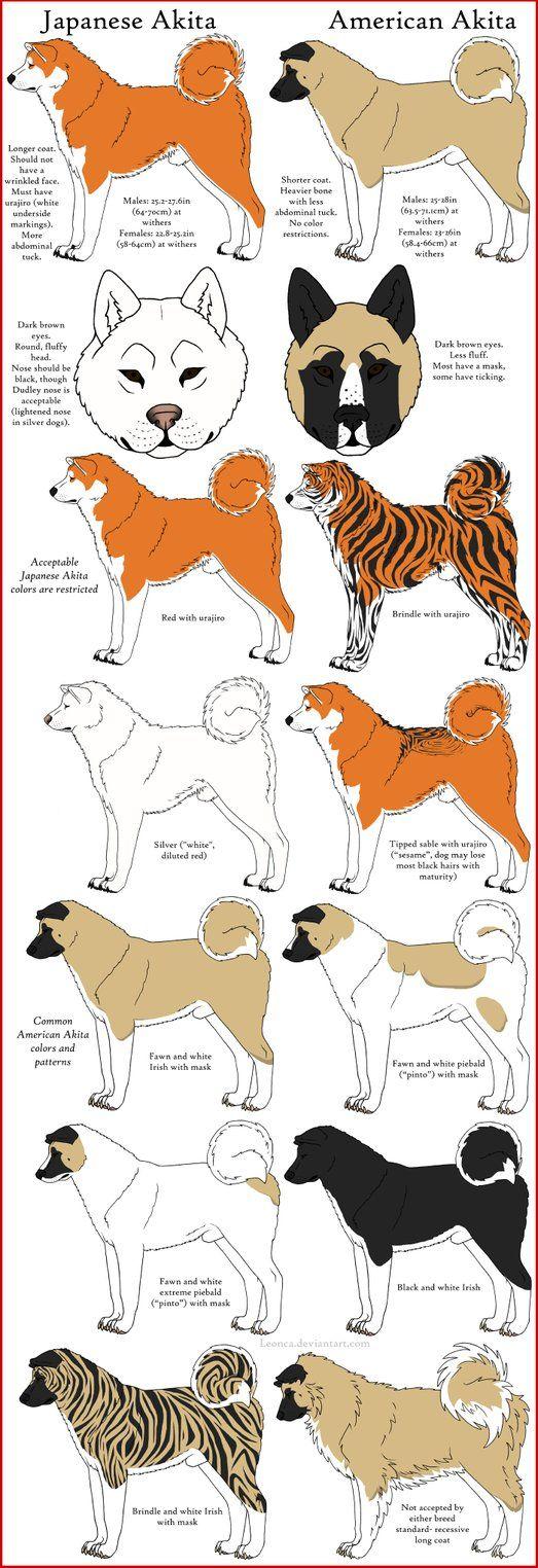 Akita Breeds Comparison by *Leonca on deviantART
