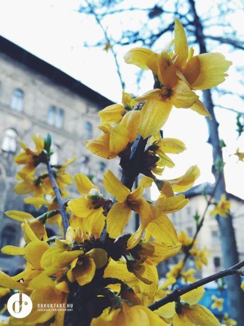 Spring at Easter. More: http://drkuktart.blog.hu/2015/04/03/hetvegi_inspiracio_12_weekend_inspiration