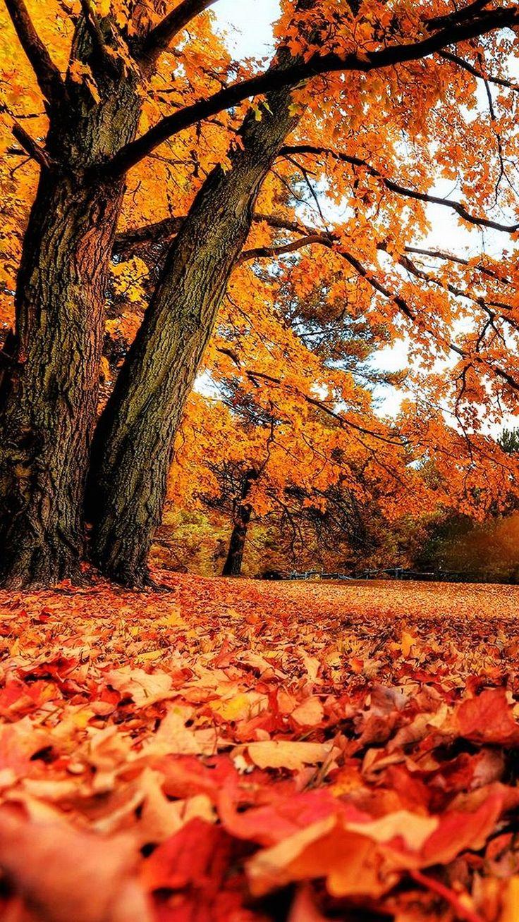 Осень картинки на телефон, красивая открытка