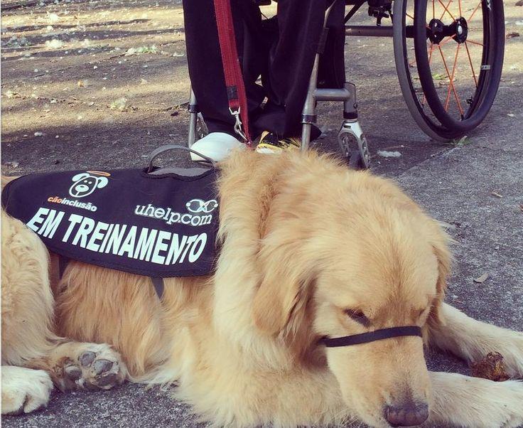 Os Cães de Assistência podem transformar a vida de pessoas com diferente tipos de deficiência. Os Cães-Guia, mais conhecidos no Brasil, ajudam pessoas com deficiência visual. Já os Cães-Ouvintes, auxiliam pessoas com deficiência auditiva e há também os Cães de Serviço, indicados para quem tem algum problema de mobilidade.
