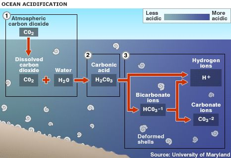 Basic description of ocean acidification and a brief outline of the impacts.