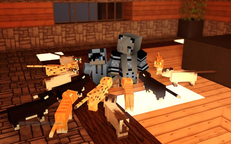 """""""We have alot of cats"""" said GingerBlue05 """"We do!"""" replies trainMCS7,  gathering CATS and OCELOTS 