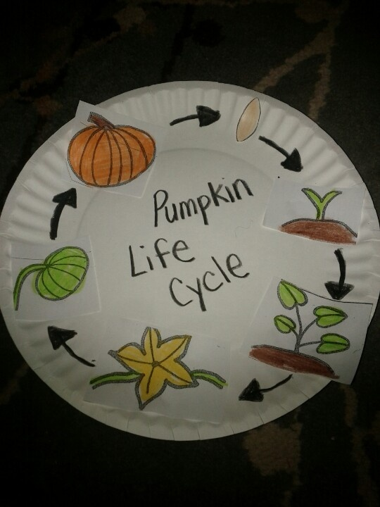 Pumpkin life cycle activity  Could do on the back of paper plate pumpkin.
