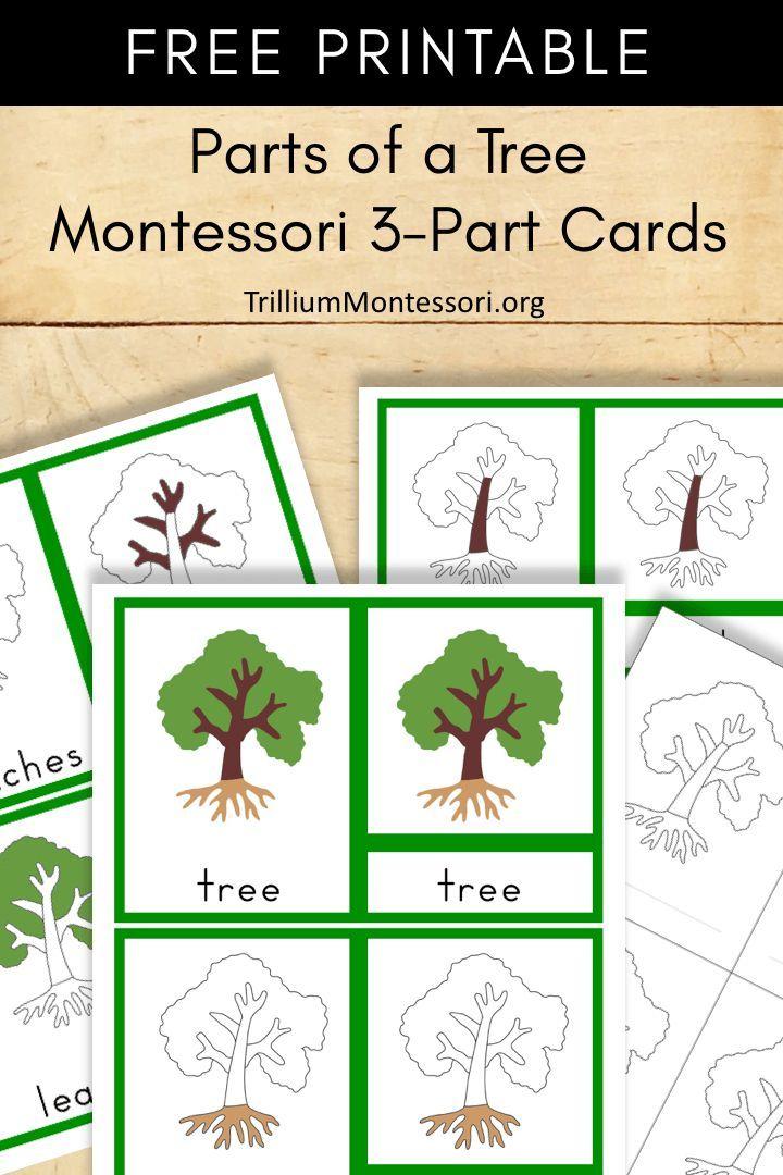 free montessori printable parts of a tree