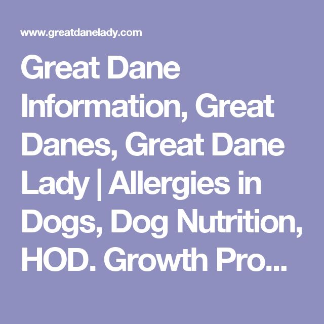 Great Dane Information, Great Danes, Great Dane Lady | Allergies in Dogs, Dog Nutrition, HOD. Growth Problems in Dogs, Yeast, Knuckling Over, Bowed Legs in Dogs