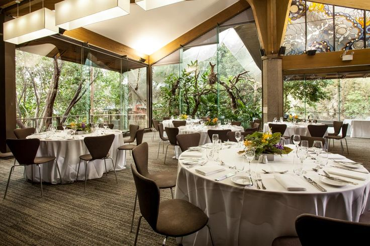 Rainforest Room at Melbourne Zoo. Tamarin monkeys peak through window at the event! Elegant theming.