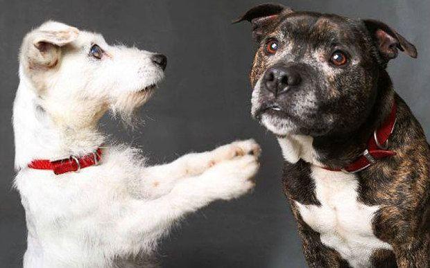 Ο σκύλος που βλέπει με τα μάτια του φίλου του!