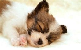 cute dogs images - Bing images