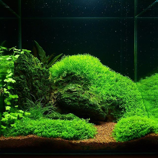 ... about Aquascaping on Pinterest Fish tanks, Underwater and Forests