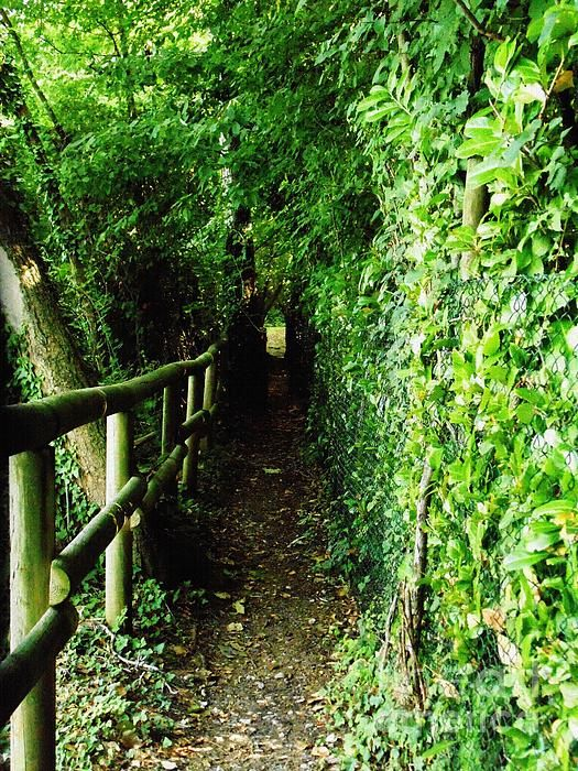 'The Green Tunnel In The Swamps Of Lake Iseo' - http://fineartamerica.com/featured/the-green-tunnel-in-the-swamps-of-lake-iseo-mariateresa-sala-picture-naif-gallery.html via @fineartamerica