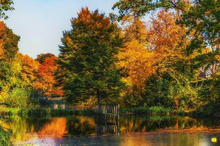 Herbstlicher Park in Goslar