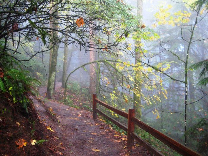 10 Amazing Trails That Every Oregonian Must Hike This Autumn