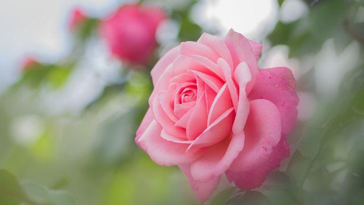 faire livrer des fleurs 23 #fleurs #bouquet