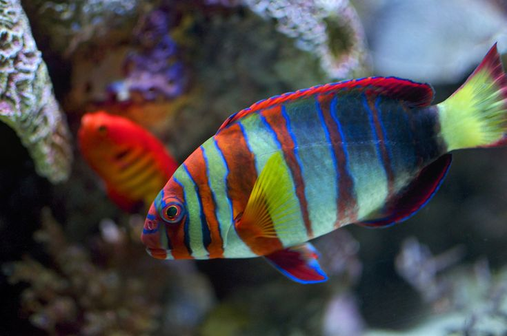 Multi color striped tropical fish under water world for Beautiful fish pictures